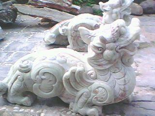 tuong-dong-vat-ty-huu (54)